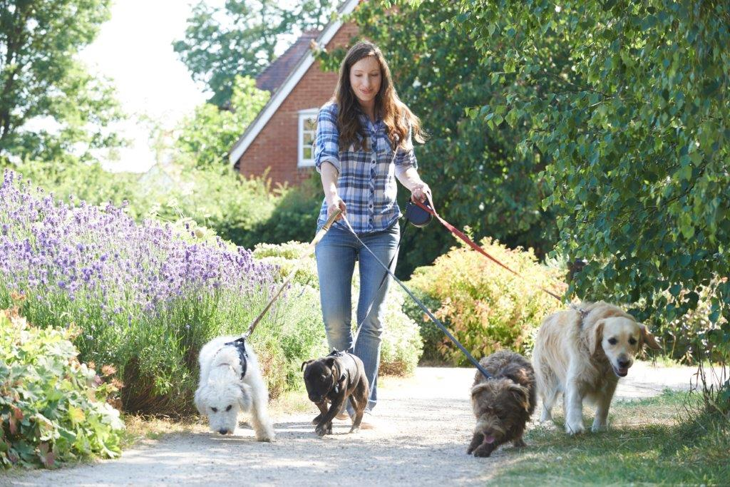 How To Promote As A Dog Walking Business
