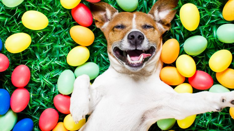 5 Ways To Promote Your Pet Business At Easter
